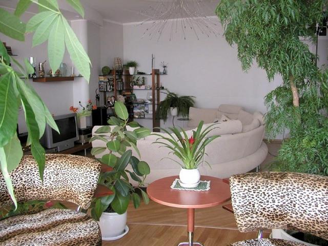 Расположение зимнего сада в гостиной